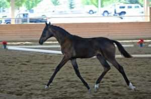 Rags inspection trot